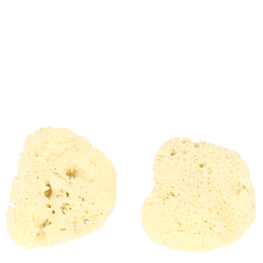 Hydrea Baby Sea Sponge Duo